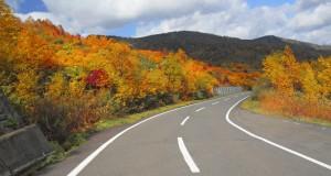 L'automne : une pratique pour l'hiver